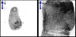 two fingerprints side-by-side for comparison